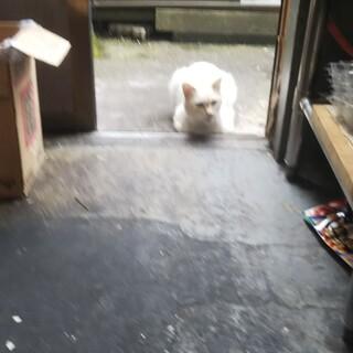 助けてください!捨てられてさまよっていた猫