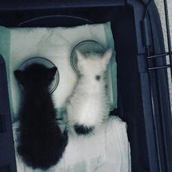 2匹の子猫を保護