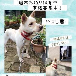 倉敷っ子やつし君のお泊り保育二日目→卒業!