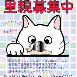 保護猫の譲渡会@開成町(足柄上郡)