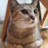 甘えたくてしょうがない♪パステルカラー美猫 サムネイル2