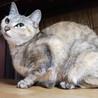甘えたくてしょうがない♪パステルカラー美猫 サムネイル3