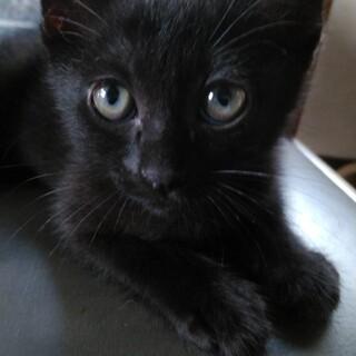 黒猫ジジ君