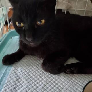 とってもハンサムなゴロスリの黒猫ちゃんです♡