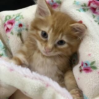 ナルちゃんは、明日葉動物病院で治療&募集します!