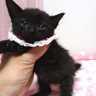 なれなれ♪黒猫の女の子★ももクロちゃん 1ヵ月半