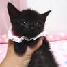 なれなれ♪黒猫の女の子★ももクロちゃん 1ヵ月半 サムネイル2