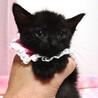 なれなれ♪黒猫の女の子★ももクロちゃん 1ヵ月半 サムネイル3