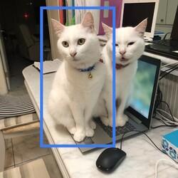 白いネコが逃げてしまいました。
