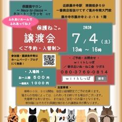 藤井寺保護猫譲渡会