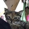 生後1ヶ月ちょっとの子猫のシャンプー