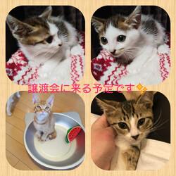 飯塚市で猫ちゃんのミニ譲渡会決定