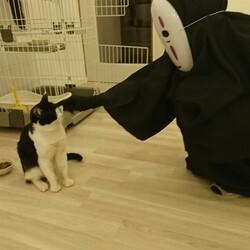 猫好きさん集まれ サムネイル2