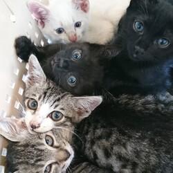 猫好きさん集まれ サムネイル3