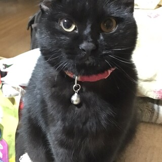 まん丸お目目の黒猫ちゃん!