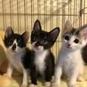 2ヶ月半 一緒にいると楽しい3姉妹 パンジーちゃん サムネイル3