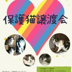 第8回 保護猫譲渡会in山口県