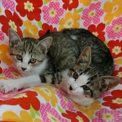 「子猫23匹のチビニャンまつり・第2弾」愛知県みよし市 サムネイル1