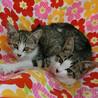 「子猫23匹のチビニャンまつり・第2弾」愛知県みよし市