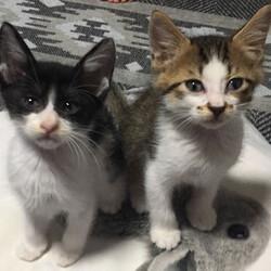 「子猫23匹のチビニャンまつり・第2弾」愛知県みよし市 サムネイル2