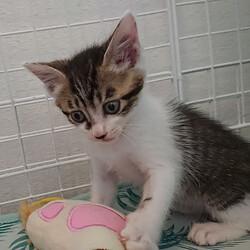 「子猫23匹のチビニャンまつり・第2弾」愛知県みよし市 サムネイル3