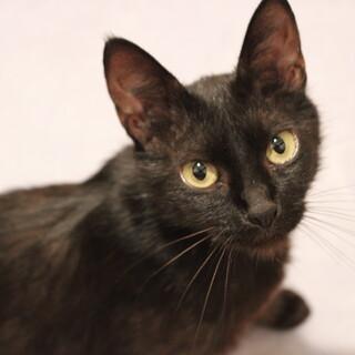 置き去りにされた黒猫ちゃんです(個人保護)