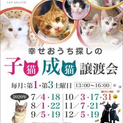 *子猫が中心譲渡会*一時預かりボランティアさん募集説明会 サムネイル3