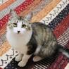 ふわふわ中毛の美形猫さん! サムネイル4