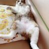 ふわふわ中毛の美形猫さん! サムネイル5