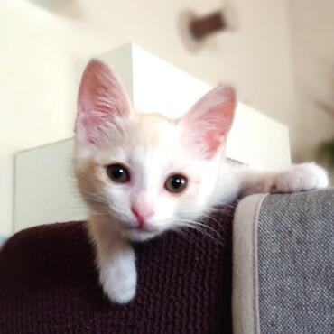 猫風邪がまだ残っていて、新しい薬と目薬で良くなってきました。