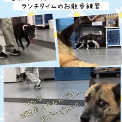 倉敷市保健所のランチタイム→どちらも卒業!