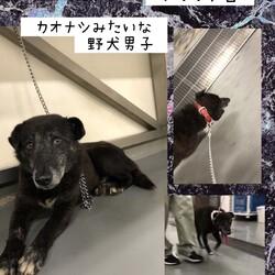 「倉敷市保健所のランチタイムお散歩練習」サムネイル3