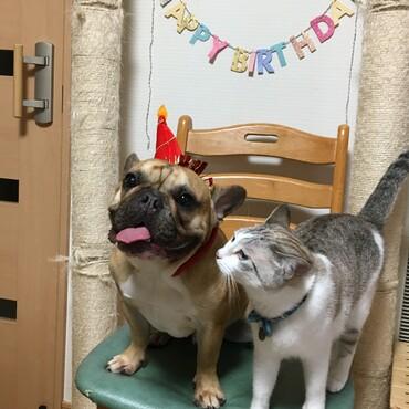 もぐの誕生日を一緒に祝うかりんちゃん 。
