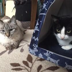 猫同士のけんか