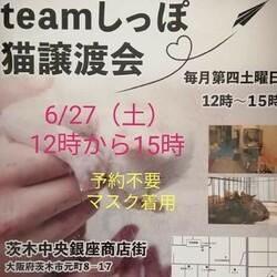 teamしっぽ譲渡会