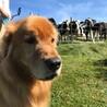 牛、こわい。