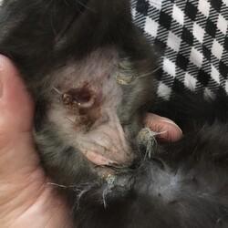 「動物虐待の痕跡」サムネイル2