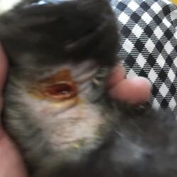 「動物虐待の痕跡」サムネイル3