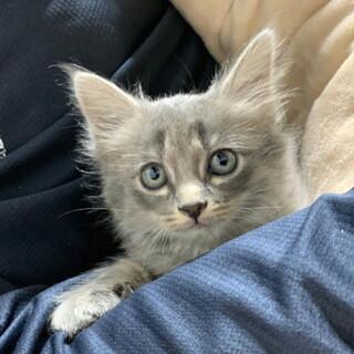お問い合せを頂きました・フワフワの子猫