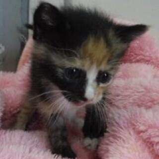里親様に迎えられました。子猫♀073