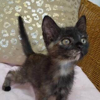 子猫のエールちゃんの里親様を探しています!
