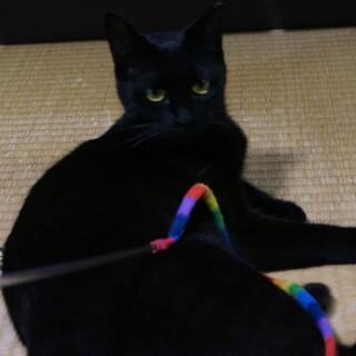 小柄で機敏な黒猫サンちゃん