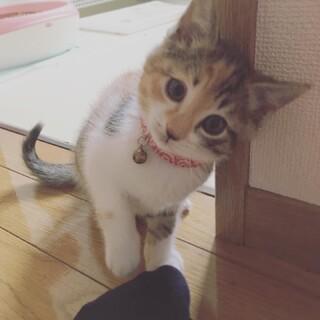 5月頭〜半ばに産まれた子猫(メス)です