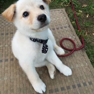生後3ヶ月くらい!可愛い白のワンちゃん