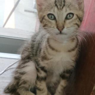 やんちゃで人懐こい子猫です