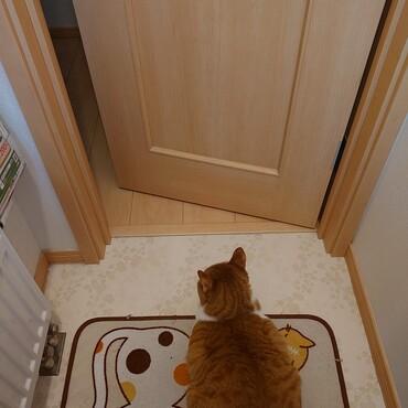 私がトイレの時は入ってきて警護してくれる