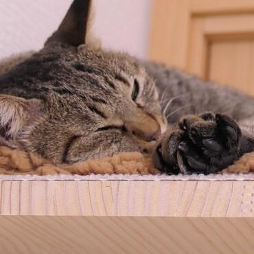 起きてるといつも「撫でて~」とせまってくるが、寝てると大人しい