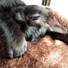 黒、ソラちゃん 3か月 メス  サムネイル2