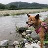 元飼い犬の【ヴィルレ】本当の飼主さんを募集中♡ サムネイル2
