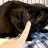 ビビリなハンサム黒猫のクロちゃんのこと サムネイル2
